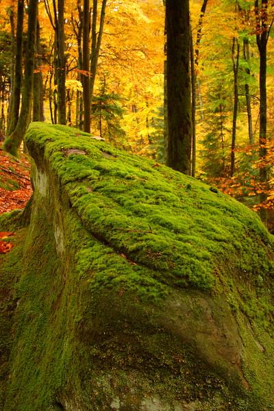 Mossy Rock in Autumn