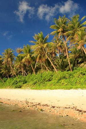Hilaan Beach and palms on Guam. © 2008 Kenneth R. Sheide