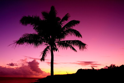 Palm at sunrise on Guam. © 2009 Kenneth R. Sheide