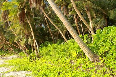 Where jungle meets beach, Guam. © 2008 Kenneth R. Sheide