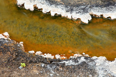 A plant struggles to survive next to thermal runoff. Yellowstone National Park, WY. © 2013 Kenneth R. Sheide