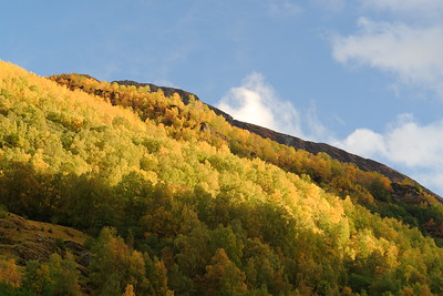 Autumn scenery lit up by afternoon light near Flam, Norway. © 2004 Kenneth R. Sheide