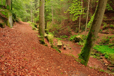 Picnic area in the forest near Hohenecken, Germany. © 2004 Kenneth R. Sheide