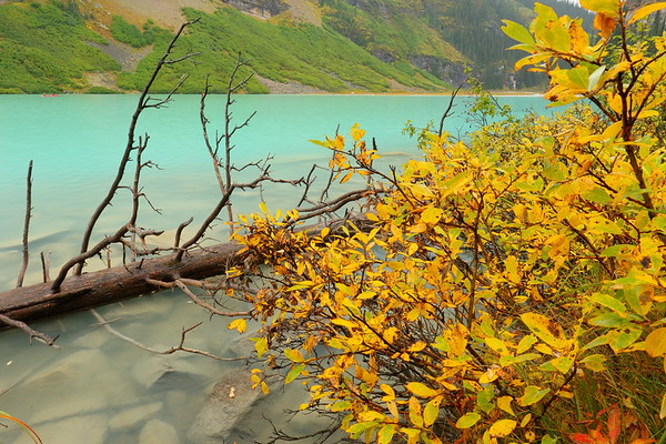 Scenery along Louise Lake. Banff National Park, Alberta, Canada. © 2019 Kenneth R. Sheide