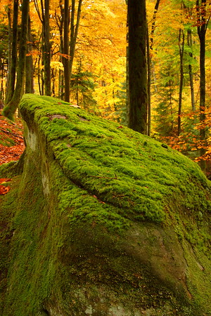 Mossy Rock in Autumn