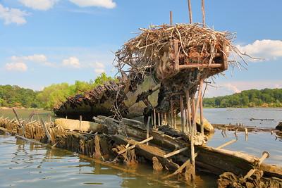 Osprey nest on old ship in Mallows Bay near Nanjemoy, MD. © 2019 Kenneth R. Sheide