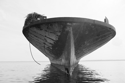 Osprey nest on old ship. Mallows Bay near Nanjemoy, MD. © 2019 Kenneth R. Sheide