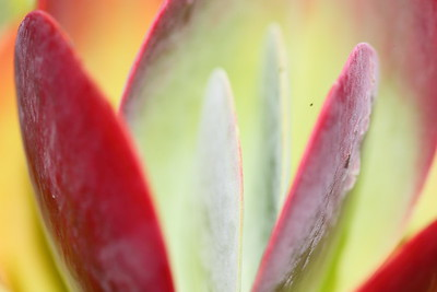 Succulent detail, Norfolk Botanical Garden, VA. © 2013 Kenneth R. Sheide