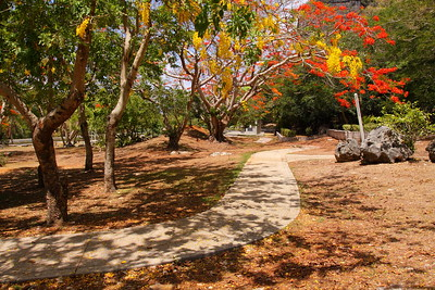 Path through colorful trees on Saipan. © 2010 Kenneth R. Sheide