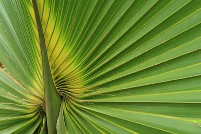 Palm detail. Audubon Swamp, Magnolia Plantation, SC. © 2008 Kenneth R. Sheide