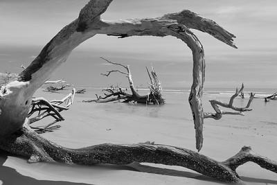 Dead trees on beach at Hunting Island, SC. © 2021 Kenneth R. Sheide