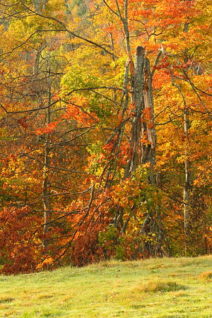 Colorful leaves on the edge of a pasture at Jenne Farm near Woodstock, VT. © 2007 Kenneth R. Sheide
