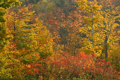 Colorful foliage in the woods near Woodstock, VT. © 2007 Kenneth R. Sheide