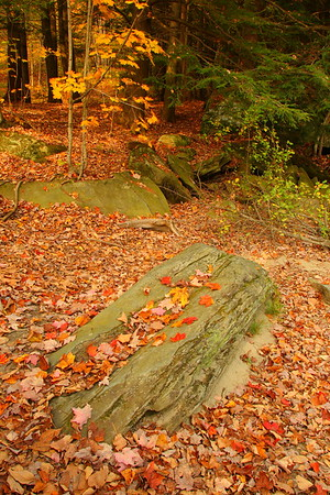 Autumn forest scenery in Jericho, VT. © 2007 Kenneth R. Sheide
