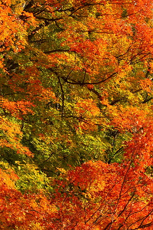 Vibrant autumn colors near Woodstock, VT. © 2007 Kenneth R. Sheide