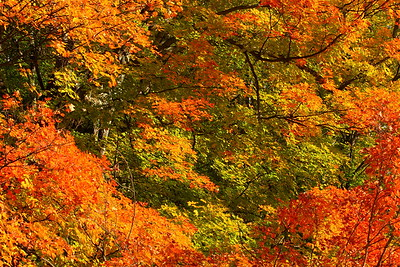 Vibrant autumn colors in the trees near Woodstock, VT. © 2007 Kenneth R. Sheide