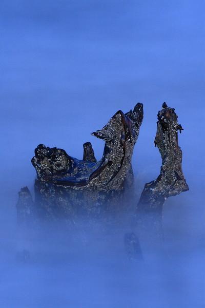 Barnacle-encrusted stump in the ocean. Grandview Nature Preserve, Hampton, VA. © 2007 Kenneth R. Sheide
