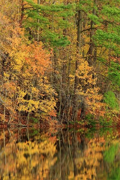 Autumn reflection in Sandy Bottom Nature Park, Hampton, VA. © 2006 Kenneth R. Sheide