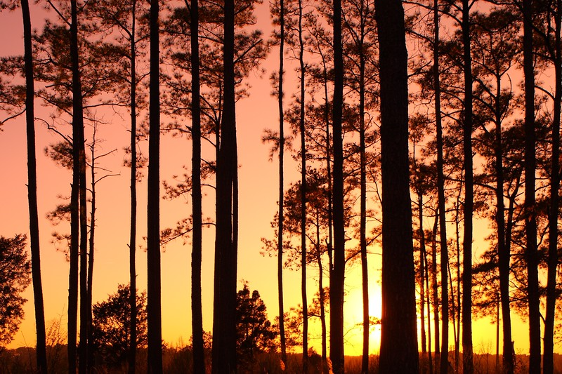 Trees silhouetted against the setting sun in Newport News, VA. © 2007 Kenneth R. Sheide