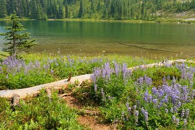 Shore of Sunrise Lake, Mount Rainier NP, WA. © 2017 Kenneth R. Sheide