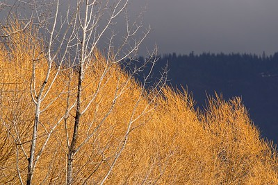 Sunlight breaks through the clouds to light up trees in a valley near Ione, WA. © 2006 Kenneth R. Sheide