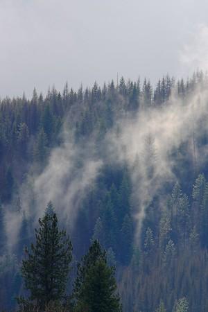 Mist rolling through the woods near Ione, WA. © 2006 Kenneth R. Sheide
