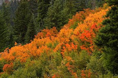 Autumn colors on Mount Rainier, WA. © 2005 Kenneth R. Sheide