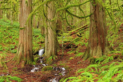 A small stream meanders through the forest in Mount Rainier National Park, WA. © 2007 Kenneth R. Sheide