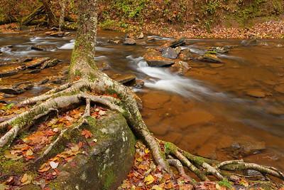 Tree roots over rack beside Hills Creek, WV. © 2018 Kenneth R. Sheide