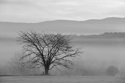 Tree in morning mist, WV. © 2018 Kenneth R. Sheide