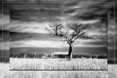 Babingley Tree 3
