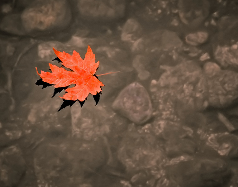 Lonely Leaf Afloat