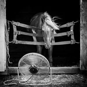 150801_ginnewt_0735 Cool Breezes, Cheshire Fair, Swanzey, NH