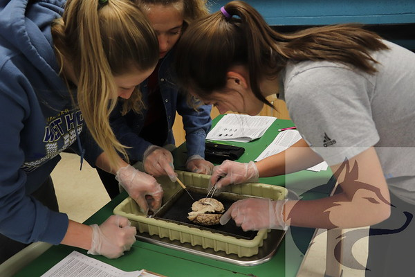 Dissecting in Schroeder's Class