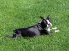Tina loves laying in the grass :) (May 20, 2006)