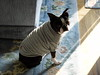 Tina's after-bath outfit (2005)