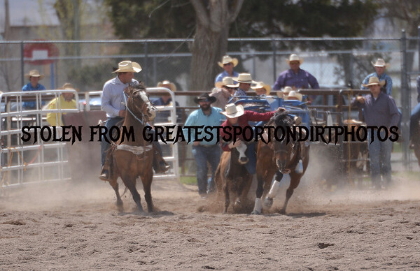 SteerWrestling