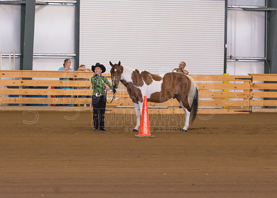 Western Grooming and Showmanship