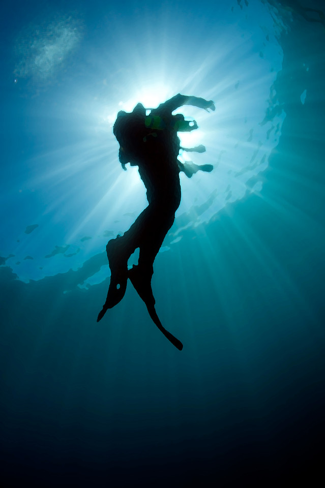 Diving the Dream