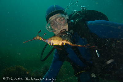 Glenys Greenwood with Weedy Seadragon
