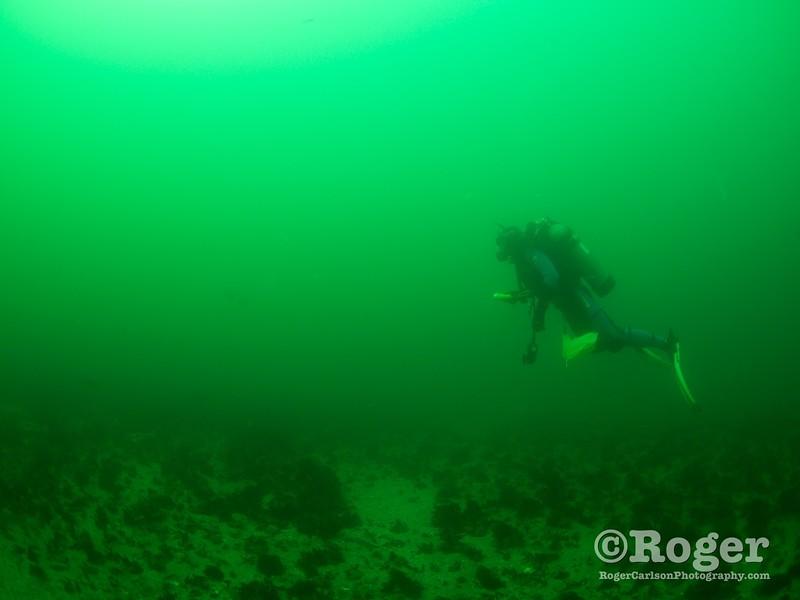 Diver hunting for lobster
