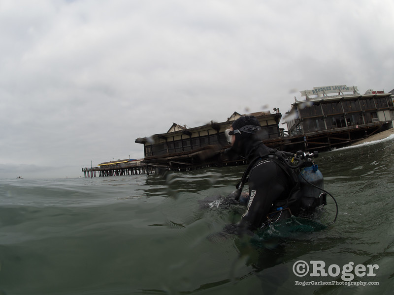 Diver entering the water at Coastal Cleanup Day, underwater cleanup at the Redondo Pier and Veteran's Park.