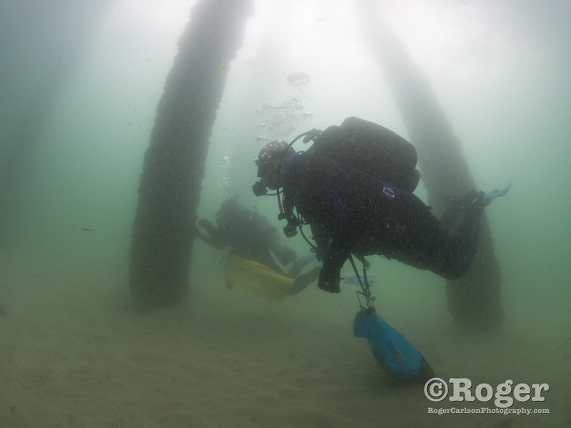 Divers collecting trash at Coastal Cleanup Day, underwater cleanup at the Redondo Pier and Veteran's Park.