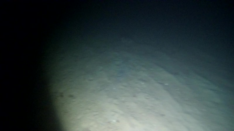 Shark in the distance on a lobster dive in the sand. Maybe a little mako? it had a silvery-blue color on its side.