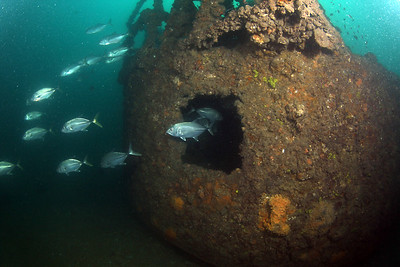 Round tank Cochrane Artificial Reef, Queensland, Australia