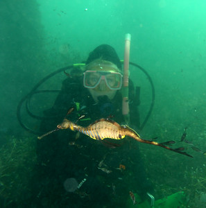 Jane with Weedy Seadragon ( Phyllopteryx taeniolatus ) Flinders Pier, Mornington Penninsula