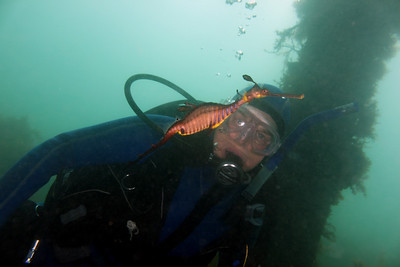 Glenys Greenwood with Weedy Seadragon ( Phyllopteryx taeniolatus ) Flinders Pier, Mornington Penninsula