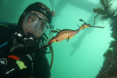 Ted Aston with Weedy Seadragon ( Phyllopteryx taeniolatus ) Flinders Pier, Mornington Penninsula