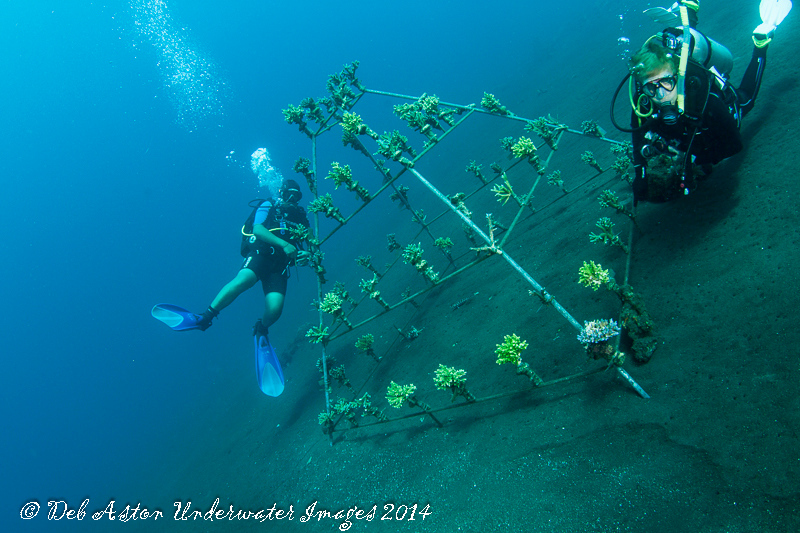 Esen and Audrey at the beginning of an articial reef, Coral Gardens, Tulamben, Bali