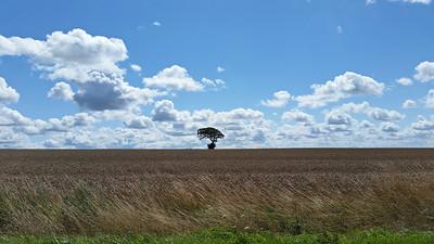 Un arbre solitaire dans la plaine agitait sa branche dans le vent pour se signaler... - S. Tesson -